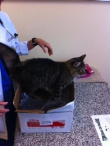 Kitty exam in a box!